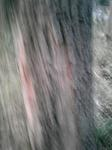 稲穂神社クヌギの木.jpg